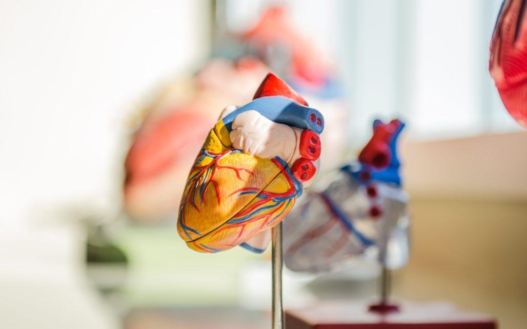 Epiheart raised €0.6 million in funding for novel cardiac therapies
